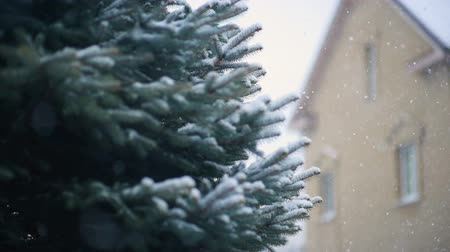 минус : snow falls slowly against the background of a Christmas tree or pine and a house. New Year, Christmas, Winter. Стоковые видеозаписи