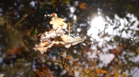 Autumn Leaves on top of the Water