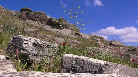 rock wall : Pergamon in springtime, flowers among ruins,  Bergama, Turkey