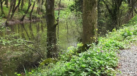 emerald green : Forest Lake in early spring, Turkey Stock Footage