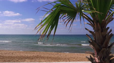 waterline : Palm tree on a sea beach on a sunny summer day, Turkey