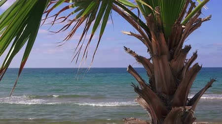 waterline : Palm tree on the sea beach background on a sunny summer day, Turkey, Black Sea
