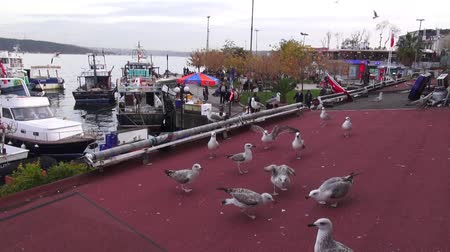 Seagulls on the roof of the house against the sea, 28.11.2013, Turkey, İstanbul