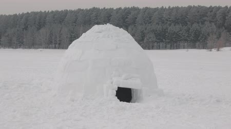 igloo : Igloo houses in tundra near forest Stock Footage