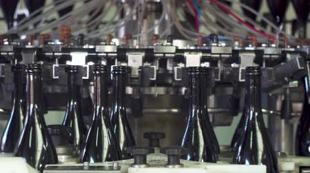 Champagne bottles on factory conveyor belt,wash bottles for bottling Wideo