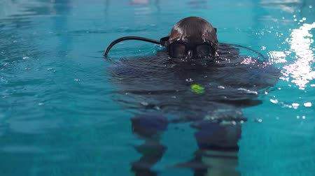 the diver trains to dive in the pool, emerges from the water