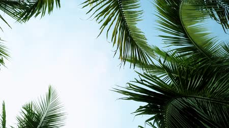 yemyeşil bitki örtüsü : Coconut palm trees foliage closeup. Aerial flight 4k  video. Stok Video