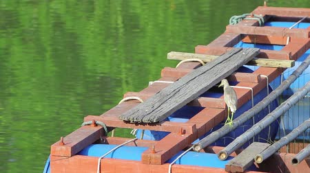 авес : A little gray heron is fishing from a river on a pier.