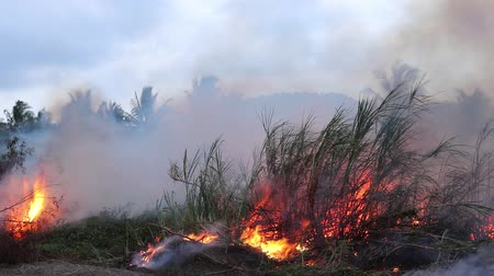 bush fire : Forest fire Bushes are burning, the air is polluted with smoke. Fire, close-up.