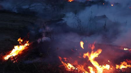 jungle : Forest fire at night. Bushes are burning, the air is polluted with smoke. Fire, close-up.