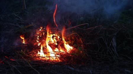 bush fire : Fire burning dry grass in forest at night, the air is polluted with smoke. Fire, close-up. Deforestation environmental.