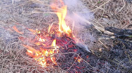 bush fire : Fire flame burning dry grass in forest, the air is polluted with smoke. Fire, close-up. Deforestation environmental Stock Footage