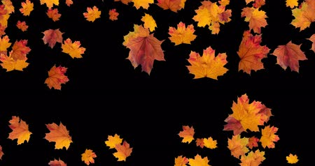 wizualizacja : Falling Autumn leaves on black background. Animation for Thanksgiving Halloween party. Loop 4K. Wideo