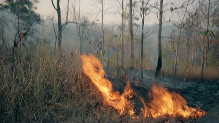 bushland : The climate crisis. Big Flame in national park. Destruction of raiforest by bushfires. Footage 4k Stock Footage
