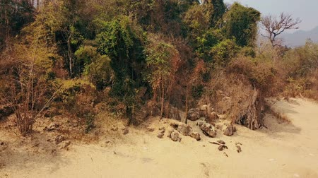 factor : Climate crisis, drought while dry season. Deforestation of rainforest in Asia. Aerial video 4k. Stock Footage