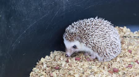spiky : hedgehog prickly animal