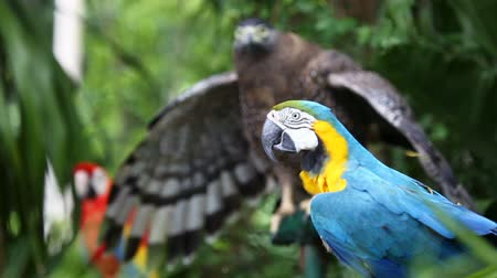 perching : Blue and Yellow macaw