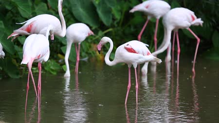 flamingi : Group of flamingo bird at park