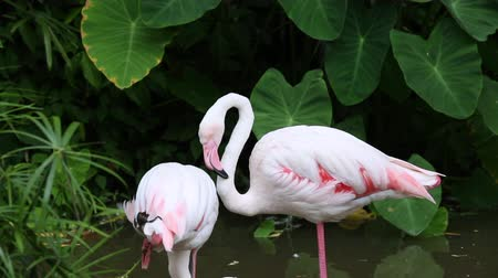 Group of flamingo bird at park