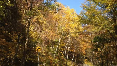 еще : Driving the autumn leaves of the season of tourism road  4  October 19, 2015 to the shooting in Japan in SapporoTaking autumn leaves of blue sky day in a vehicle-mounted camera Стоковые видеозаписи