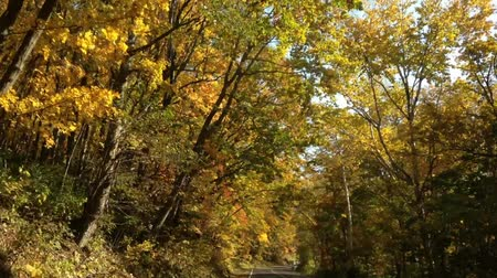 еще : Driving the autumn leaves of the season of tourism road  1  October 19, 2015 to the shooting in Japan in SapporoTaking autumn leaves of blue sky day in a vehicle-mounted camera Стоковые видеозаписи