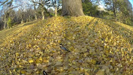 wideangle : In healthy wild birds  1: shoot ultra wide angle lens with a camera crane
