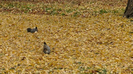 Squirrel in autumn autumn leaves  2: high speed photography