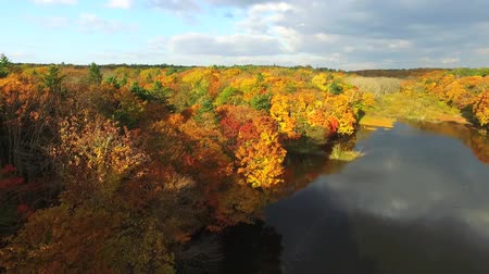 Aerial photography: yellow autumn leaves and water in clouds and the sky