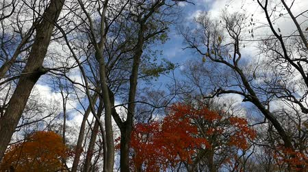 wideangle : Autumn Woods taken with a camera crane  Stock Footage
