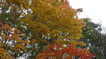 endure : Taken with a camera crane autumn landscapes  17 Stock Footage