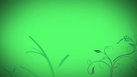 anima : Animated grow flower green background