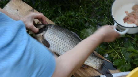 čištěný : Womans hand pulls a large carp out of the bowl and pull out the gills. Three fresh carp in a large bowl with water Dostupné videozáznamy