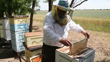 pszczoła : Beekeeping. Working bees on the honeycomb with sweet honey. Honey is bee keeping healthy produce. Bee honey collected in the yellow beautiful honeycomb.