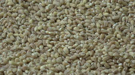 kasze : Wheat grains. Wheat and cereals. Wideo