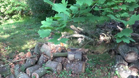 arbol roble : Pile of wood logs