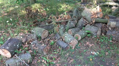 樹皮 : Pile of wood logs