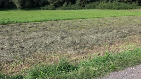 mow : Mowed  not mowed grass in  meadow. |