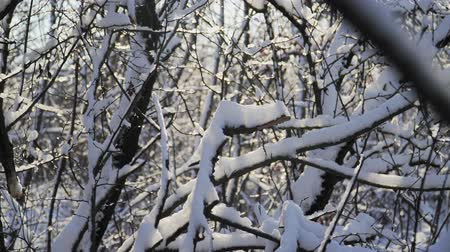 meseország : Snow lies on the branches of trees in the forest. A beautiful winter tale Stock mozgókép