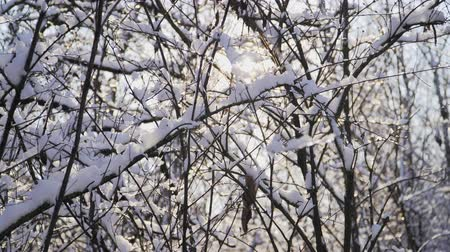 полярный : Beautiful snowy forest on a bright Sunny winter day. The ice on branches trees