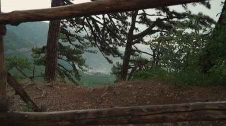mohás : Shooting on Steadicam Roll 360. Beautiful landscape in mountains. pine forest