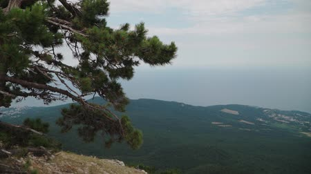 plateau : One pine tree stands on the edge of the Ai Petri mountain. In the background a beautiful landscape of forest and sea. View from a great height. Slow motion. Shooting on the steadicam