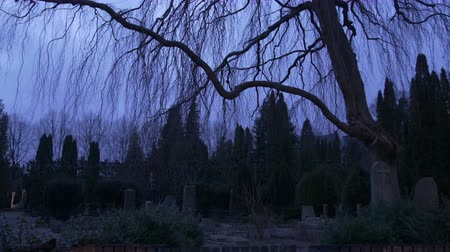 temető : A spooky dark and gloomy clip of a graveyard at dusk  nightfall as night approaches. You see gravestones scary trees and black birds flying by. Perfect for Halloween.