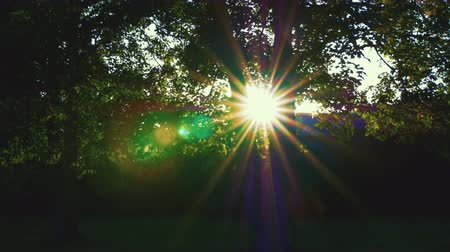 artsy : The sun pops out between  through two trees shining through them on a beautiful summer evening.