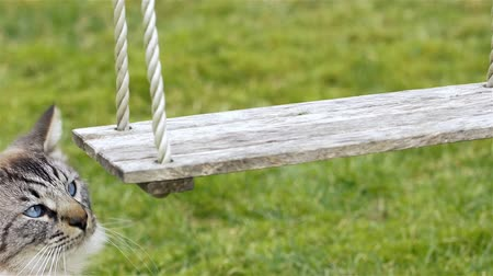 Cinemagraph (loopable video repeated movement) of a curious white pet cat frozen in time looking at a wooden swing moving in slow motion. This is a moving background, a seamless loop that repeats perfectly into infinity. Stock Footage