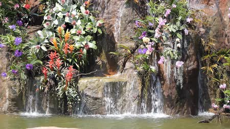 orquídeas : Waterfall and flower in garden Stock Footage