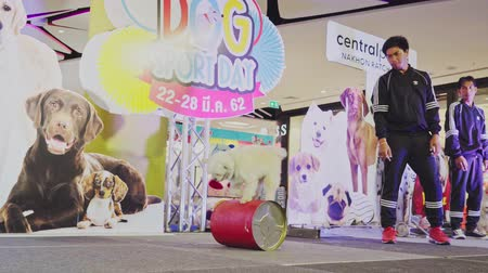 művelt : NAKHONRATCHASIMA, THAILAND - MARCH 23, 2019:Dog show in shopping mall