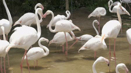 flamingi : Flamingo of animals Travel with family holiday