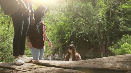 photography themes : Asian young girl group walking on wood travel in nature background sunlight