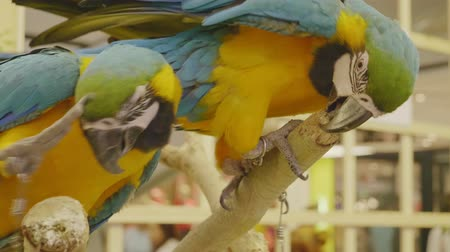 klec : Close-up feeding Parrot,Colorful Macaw