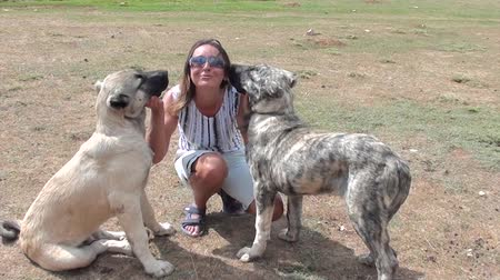kobieta pies : Happy woman  playing with two huge dogs